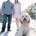 Engagement photography. Photo of labradoodle with couple in the background.