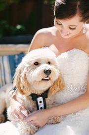 Portrait of bride holding her dog. Dog wearing a tuxedo.