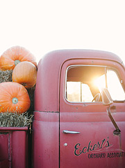 Red vintage truck loaded with pumpkins