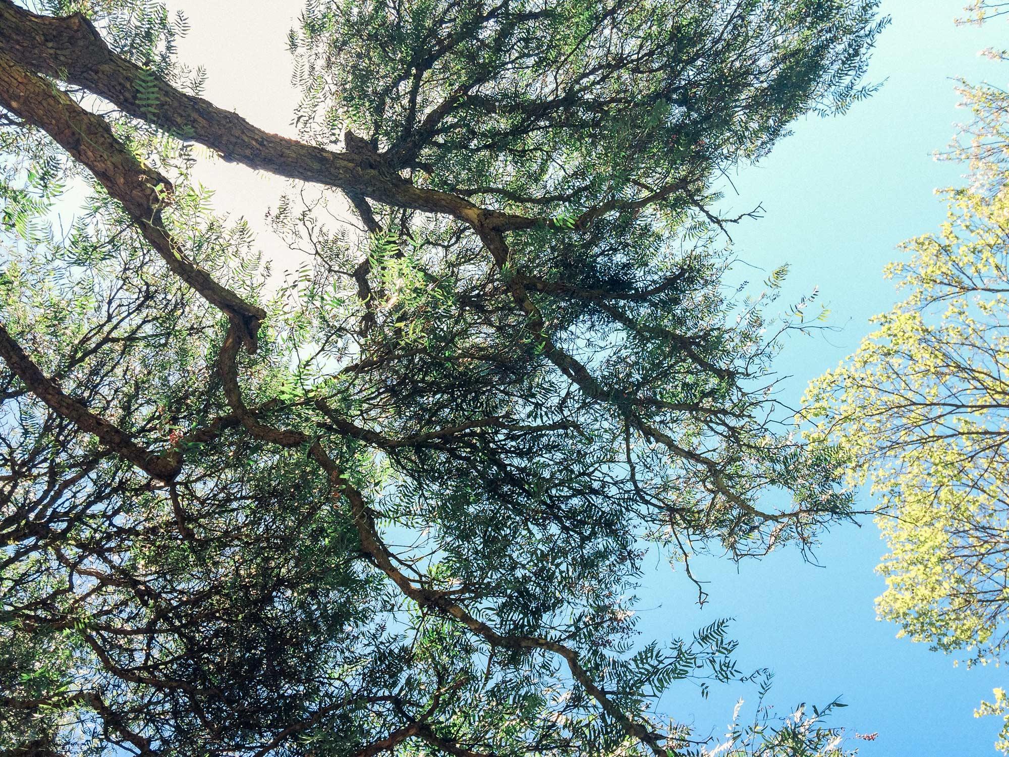 tree-hr